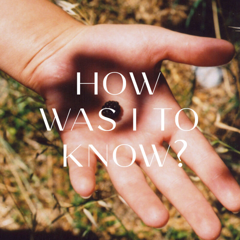 How Was I To Know? - The Calicos